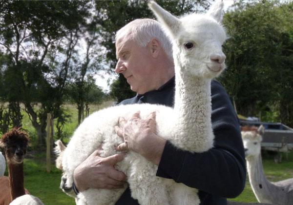 alpaca-1234
